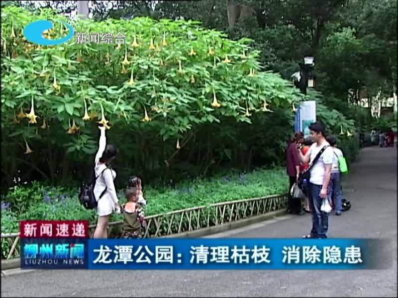 龙潭公园:清理枯枝 消除隐患