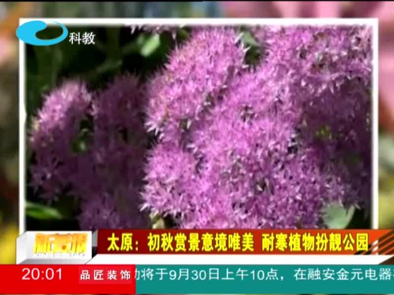 太原:初秋赏景意境唯美 耐寒植物扮靓公园
