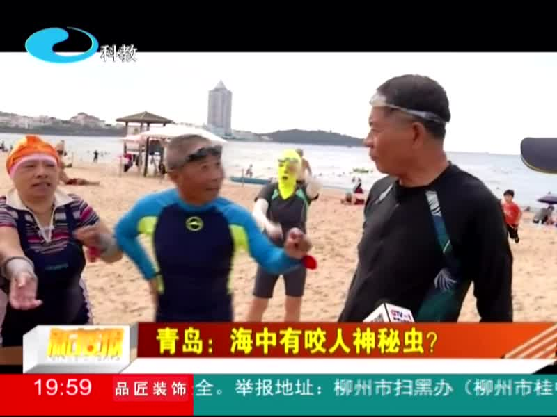 青岛:海中有咬人神秘虫?