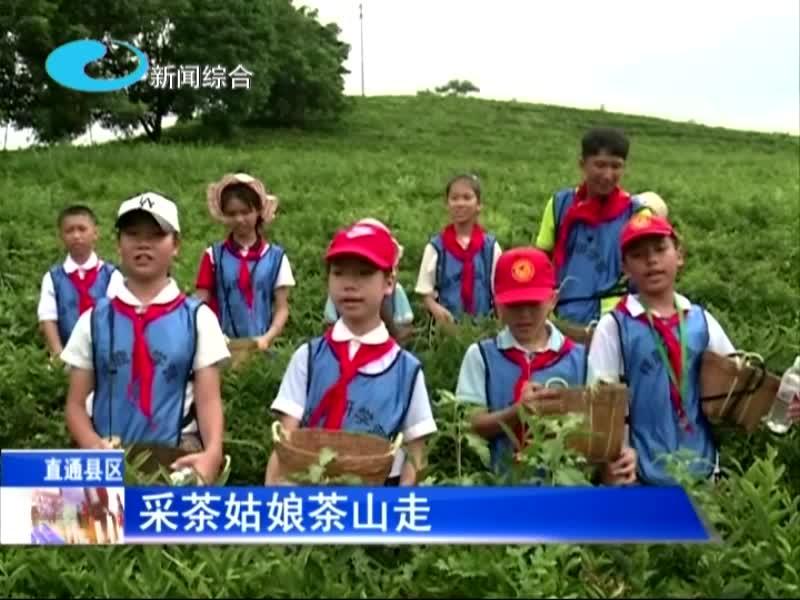 暑期社会实践 传承弘扬茶文化