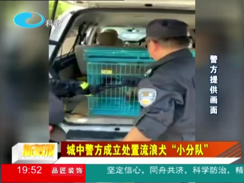 """城中警方成立处置流浪犬""""小分队"""""""