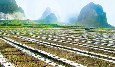 广西规范土地整治活动 实行先建后补、以奖代补制度