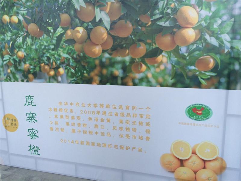柳州柑桔要打造成农业首个百亿元产业!