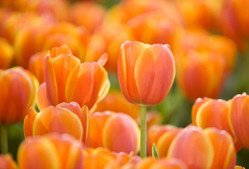 阳光和煦微风轻拂 他们已经开始在园博园播种春天啦!