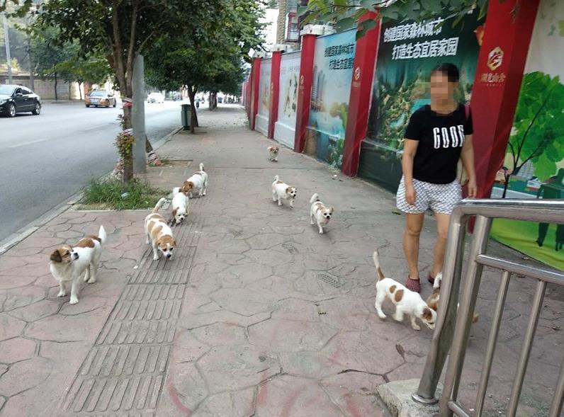 7—22点城区禁止遛狗 对于这则通告你怎么看?