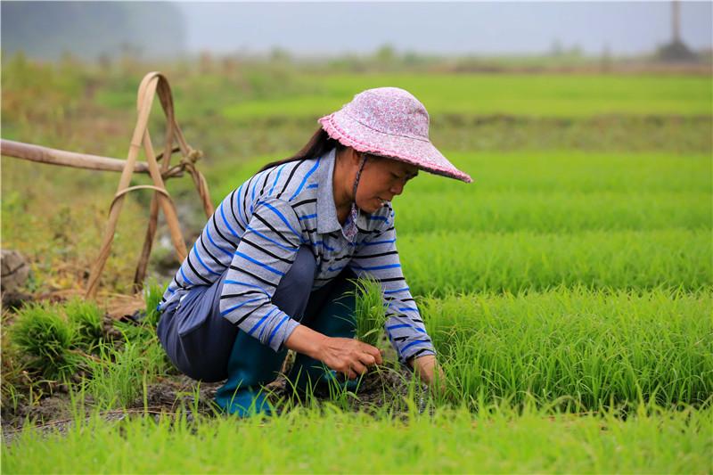 【高清航拍】谷雨至农事忙 田间尽是繁忙的景象