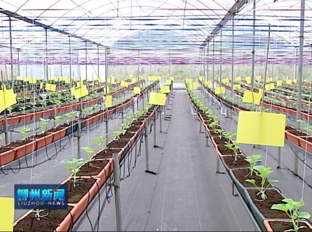王石坚:发展生态农业休闲游 带动贫困村脱贫摘帽