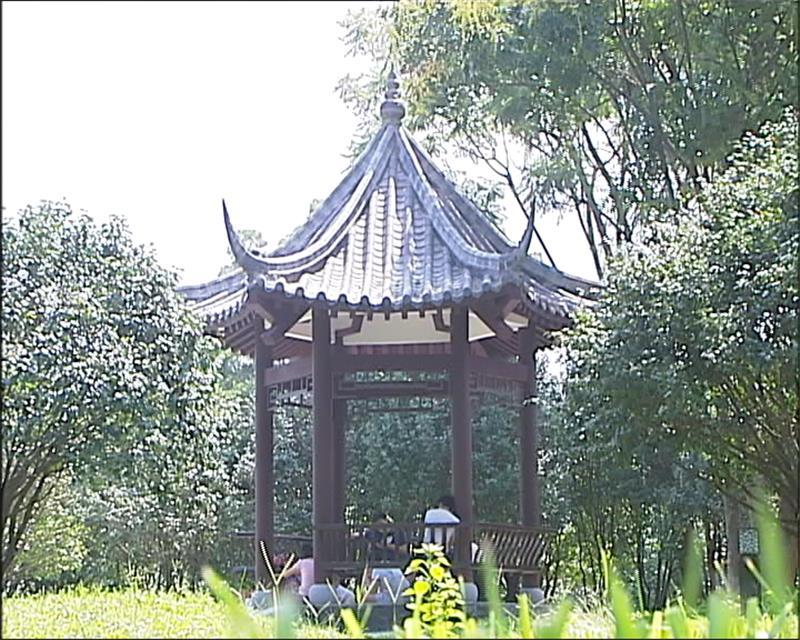 雀儿山公园里建了个茶花园 已基本完工