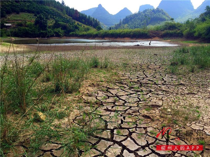 柳州已出现中度干旱,未来十天难出现有效降雨