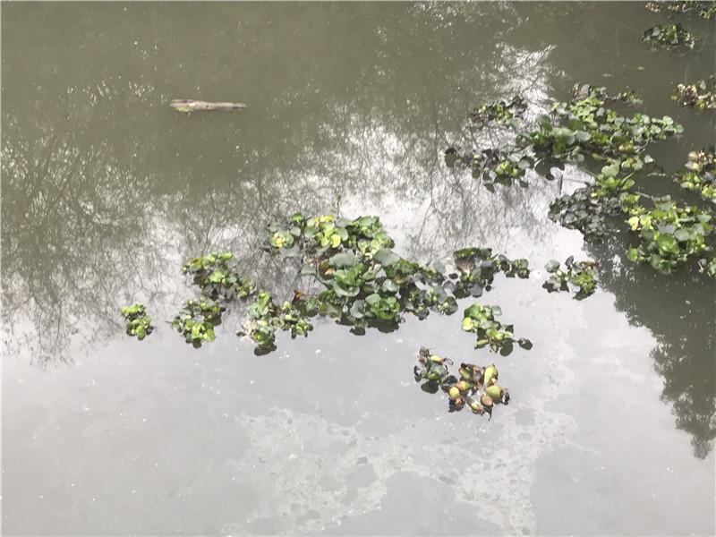 园博园碧绿的河水变浑浊,它到底怎么了?