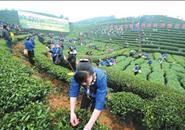 广西评选农业示范区 唯一一个五星级在柳州!