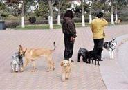 广西将立法严管!以后遛狗不牵绳,后果很严重哦……