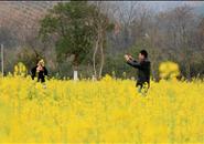 你想感受春天的气息吗?融安的3万亩油菜花等着你~