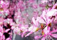 """新华社为柳州蜕变点赞 昔日""""酸雨之都""""如今越来越美"""