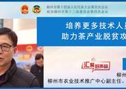 市政协委员张征:培养更多技术人员 助力茶产业脱贫攻坚