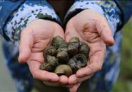 柳州人每吃三颗螺蛳,大概有一颗便是他养的