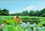 8个水生花卉新品种首次亮相!19日柳州园博园等你喔~