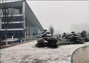 柳州仍是南风天,只能手机看雪景