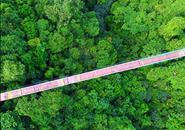 融水双龙沟景区建广西首座玻璃悬索桥,你有胆玩吗?