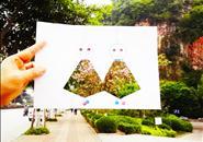 柳州紫荆花摄影大赛手机组获奖作品