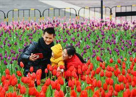 群花绽放 花香满园