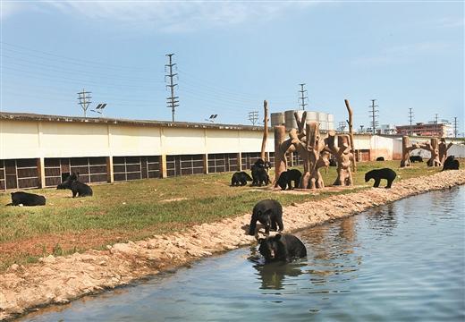 雄森动物大世界已进驻黑熊,老虎,长颈鹿等动物.