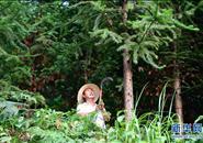 河南新县:推进碳汇交易 探索生态扶贫新路径