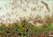 """安徽庐江""""水上森林""""层林尽染"""