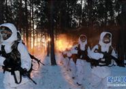 """北极哨兵:挺立在风雪中的""""北极杨"""""""