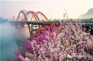 看紫荆花城,赏醉美柳州