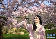 武汉东湖樱花节开幕