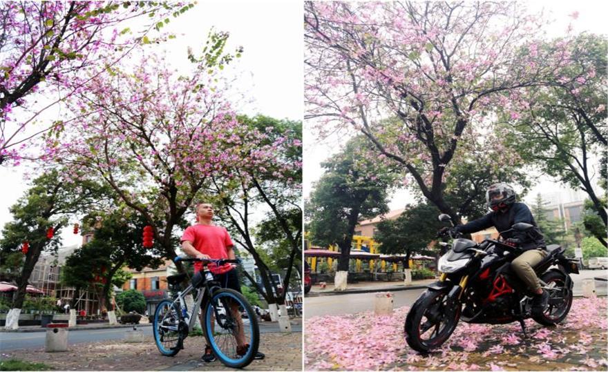【横跨一年的记录】去年今日此树旁,人面紫荆相映红