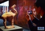 """意大利返还文物艺术品与祖国人民""""团聚"""""""