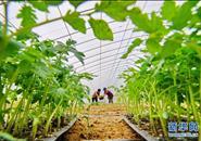 河北滦州:发展集体经济 助推乡村振兴