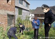 w88优德在线市三江警方依法铲除百余株非法种植的罂粟