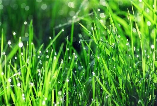 清明,用花寄托哀思~柳州公墓免费敬献10万支鲜花代为祭扫